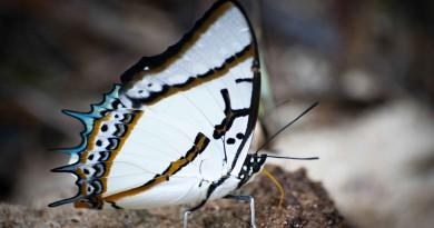 August butterflies in Jian feng ling National Park