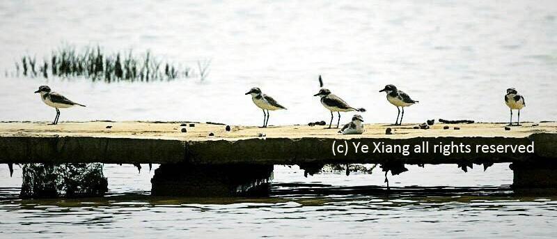 Tropical birds Hainan
