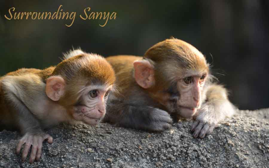 Surrounding Sanya Header
