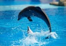 Things to do in Sanya, Tropical Ocean World
