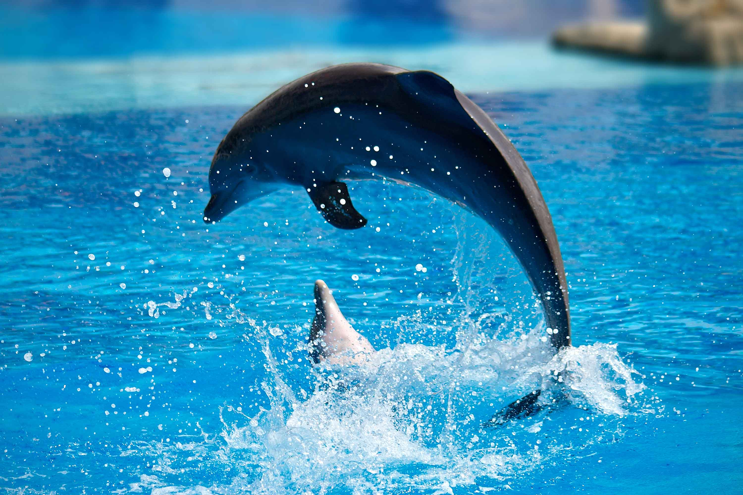 Tropical Island Beach Ambience Sound: Things To Do In Sanya, Tropical Ocean World