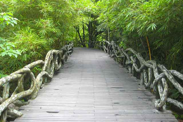 Yanoda Rainforest Park