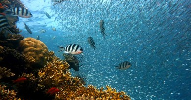 Things to do in Sanya, Yalong Bay Underwater World