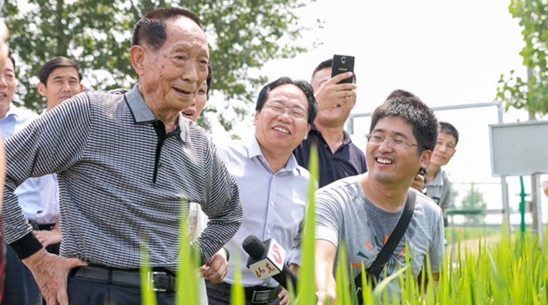 "Yuan Longping announces plans for high yield ""Sea rice"""