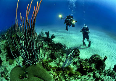 Documentary on South China Sea ecology to be made in Hainan