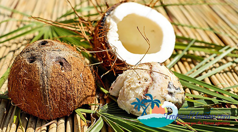 Hainan scientists complete genome sequencing for the humble coconut