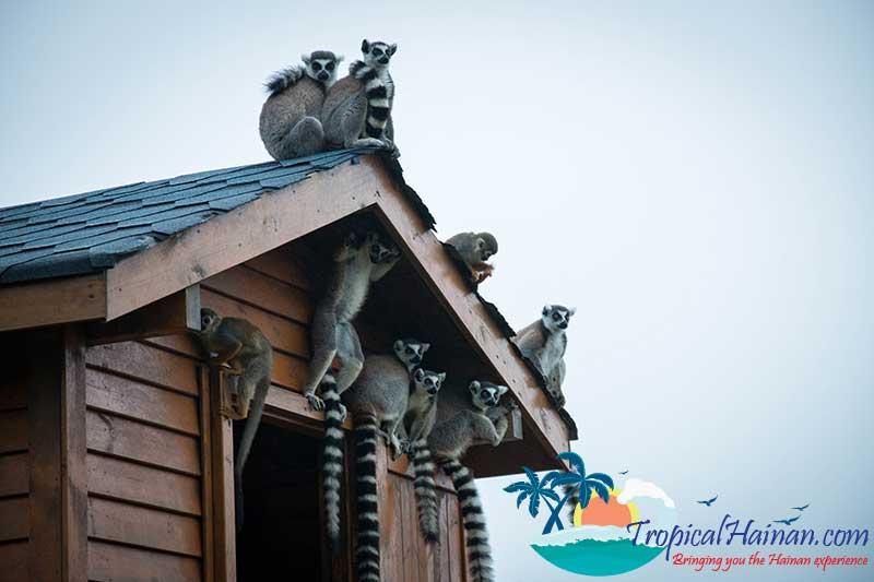 Guilin-Yang-Zoo-Haikou
