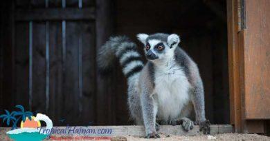 Guilin Yang Zoo, things to do in Haikou