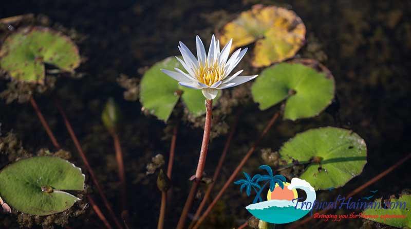 Discover-the-Meishe-Wetlands-Park-Haikou-5