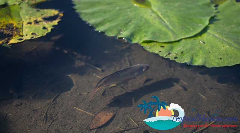 Discover-the-Meishe-Wetlands-Park-Haikou-7