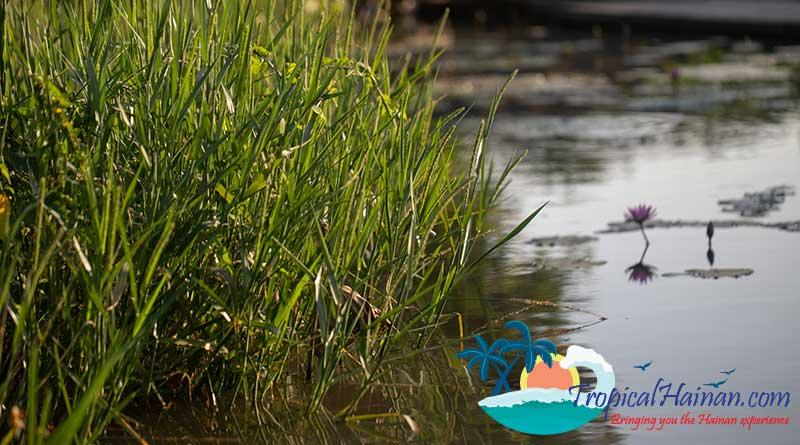 Discover-the-Meishe-Wetlands-Park-Haikou-8