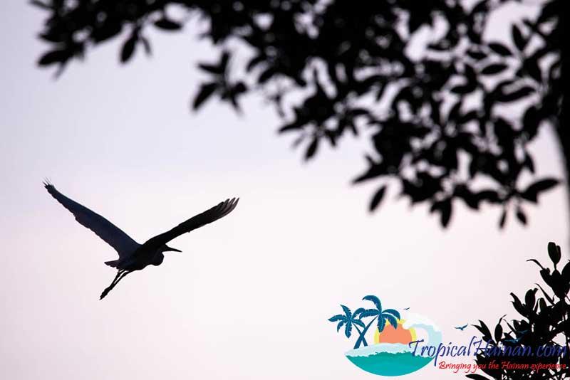 Dongzhaigang-Mangroves-and-wetlands-Haikou-Hainan-Island-China-(19-of-18)