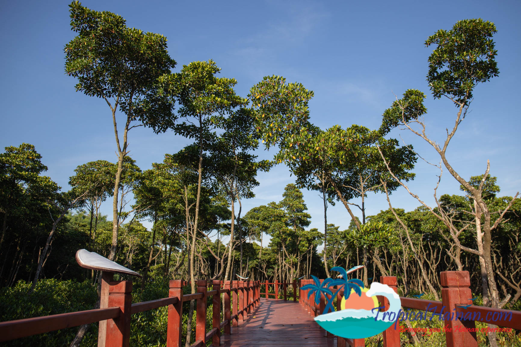Dongzhaigang Mangroves and wetlands Haikou Hainan Island China (4 of 18)