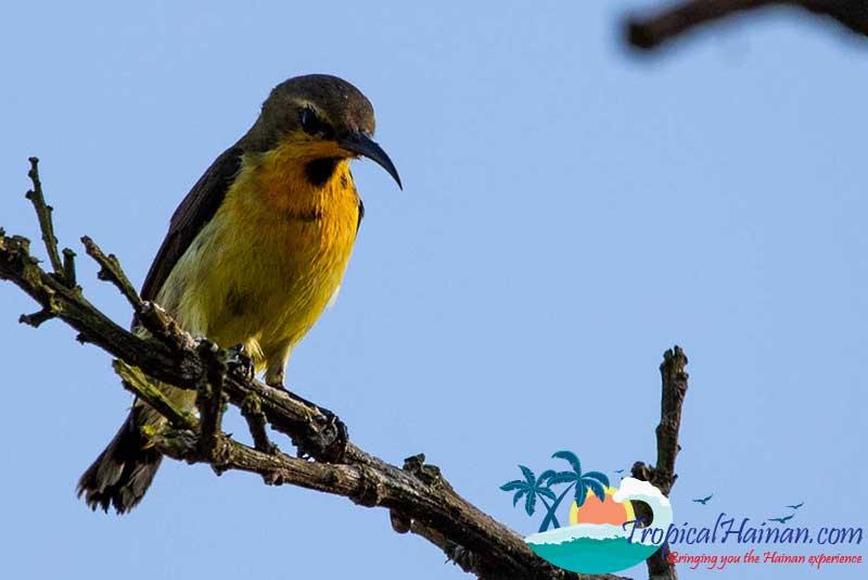 Dongzhaigang-Mangroves-and-wetlands-Haikou-Hainan-Island-China-bird-2