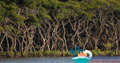Dongzhaigang mangroves, wetland ecosystems Haikou, Hainan Island