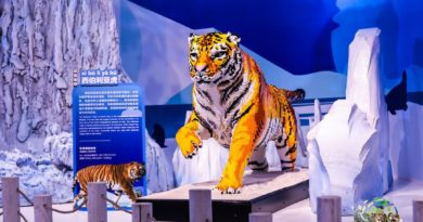 BrickLive Animal Paradise, an interactive LEGO experience has come to Haikou