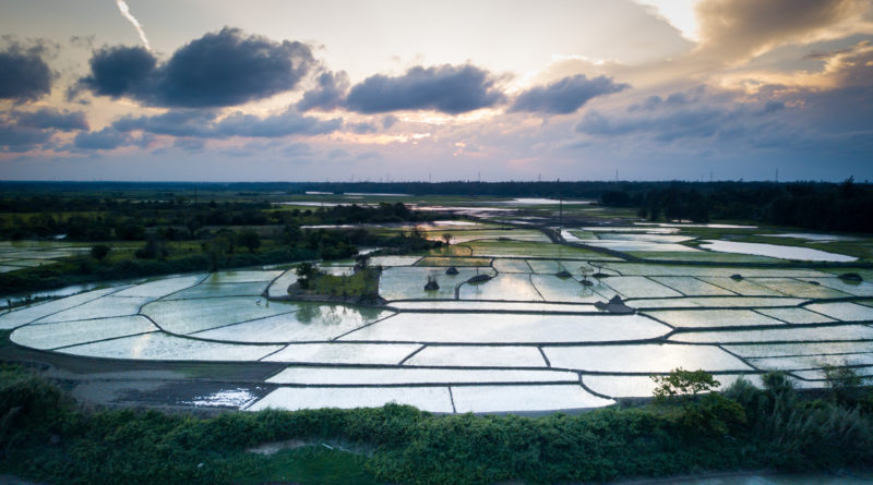 Spectacular views of rice paddy fields in the Haikou countryside