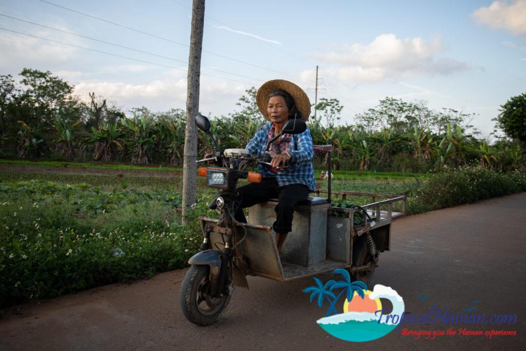 Working in the rice paddy fields Haikou Hainan Island China