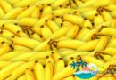 First Tropical Fruit Exposition in China to take place in Sanya March 7 – 9th