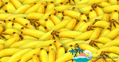 First Tropical Fruit Exposition in China to take place in Sanya March 7 - 9th