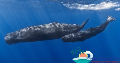 sperm-whale in South China Sea off Hainan