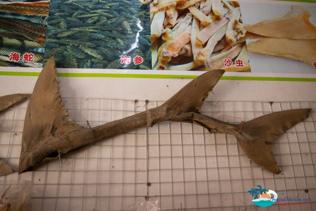 shark fin hanging in a store wenchang hainan island