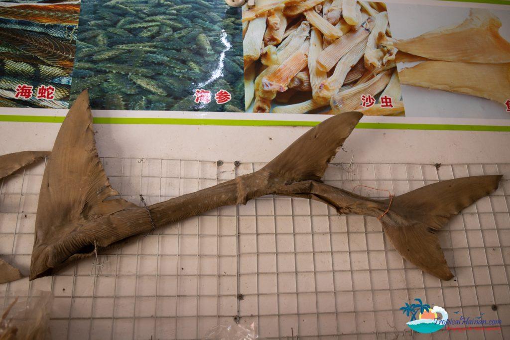 shark fin hanging in a store wenchang hainan island
