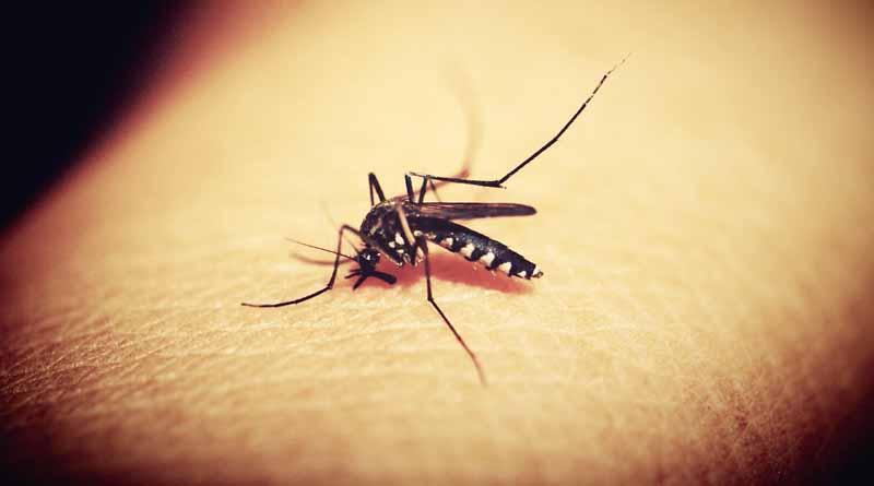 Hainan Province dengue fever alert