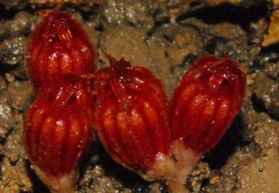New plant species discovered in Hainan