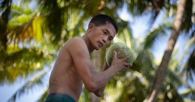 Interesting facts about coconut trees
