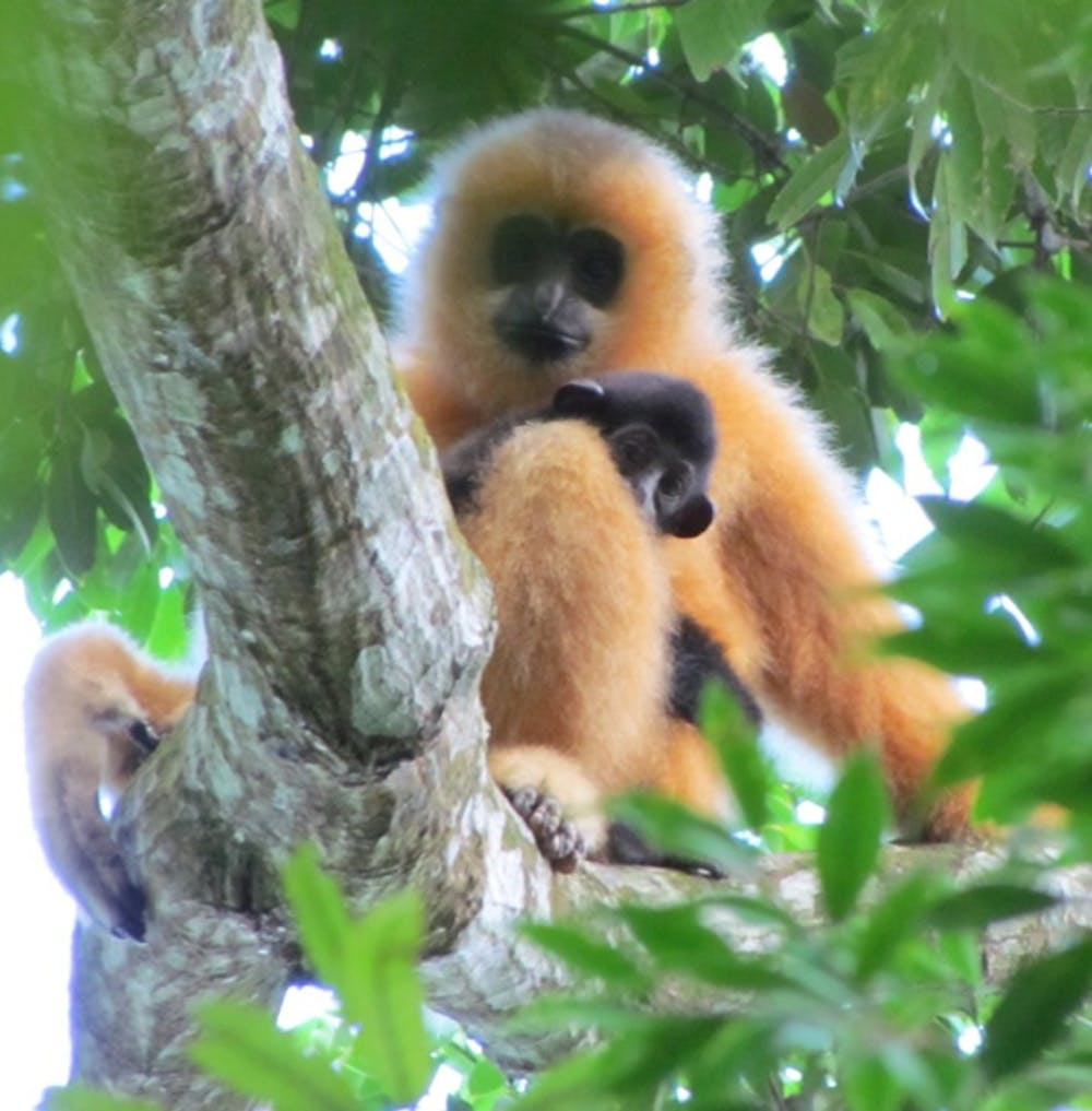 Hainan launches center for studying gibbons in Haikou