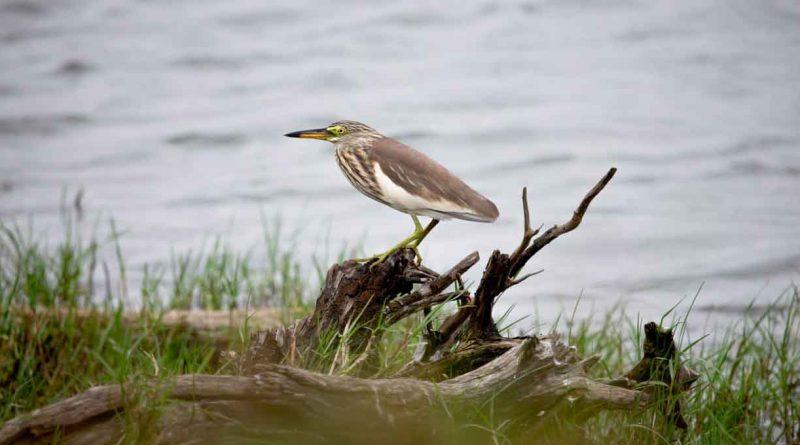 Wild birds on Hainan island