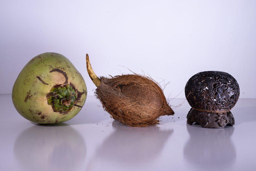 Coconut Carver