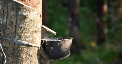 Sustainable natural rubber on Hainan island China
