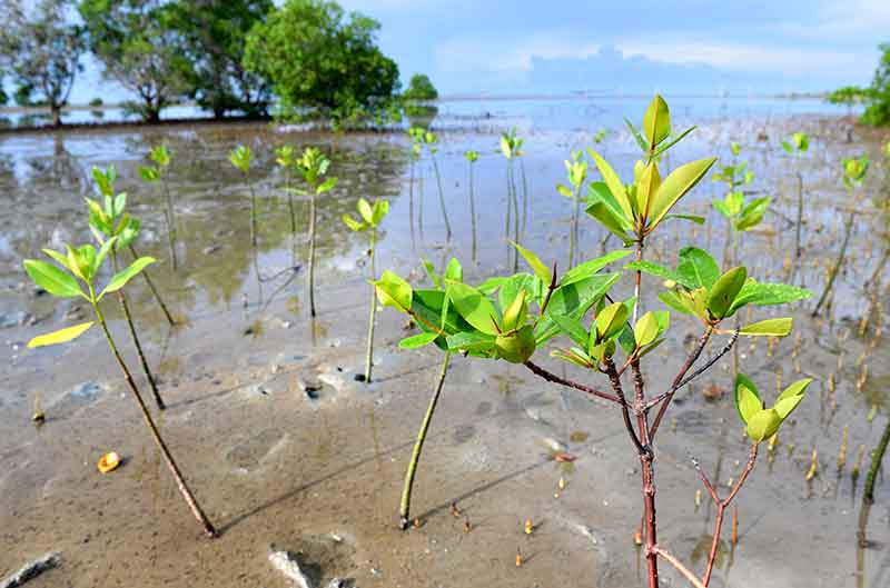 small-mangrove-forest-area