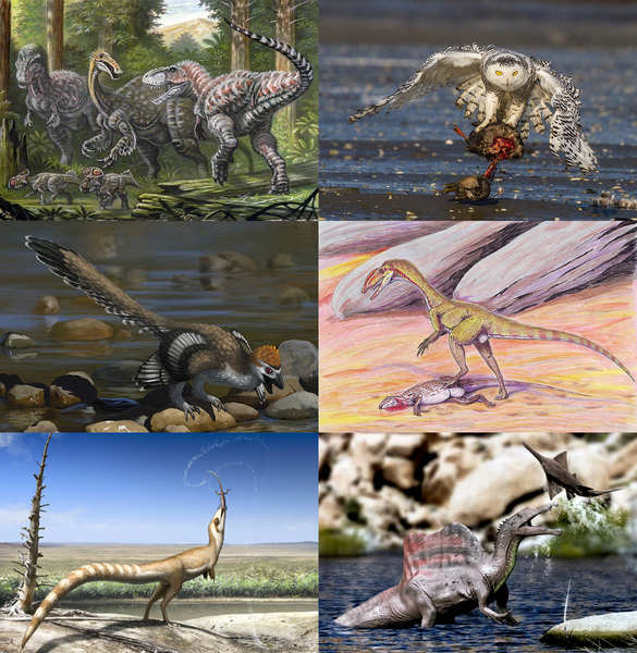 Diversity of theropod dinosaurs.