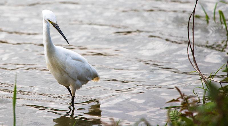 Water-birds-in-Tunchang