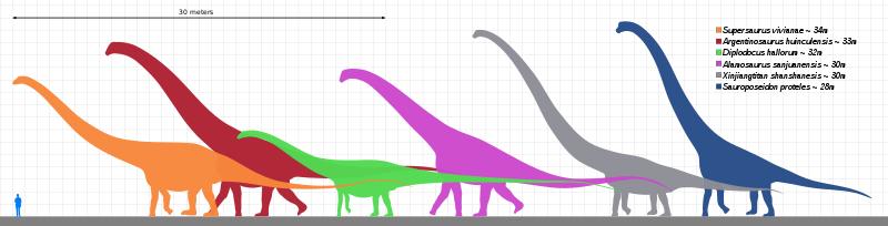 sauropods dinosaurs