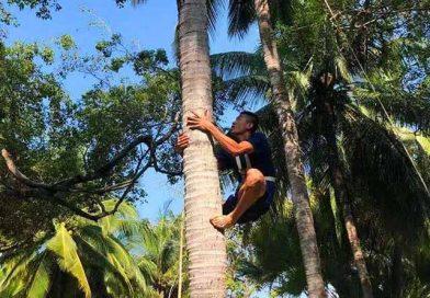 San yue san folk festival coconut climbing competition