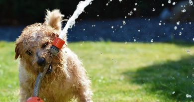hot tips for keeping your dog cool this summer in Hainan