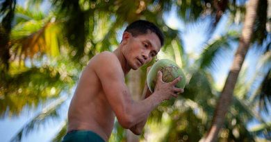 Coconut prices in Haikou are rising