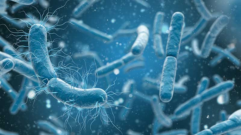 Bacteria are among the fastest reproducing organisms in the world, doubling every 4 to 20 minutes.