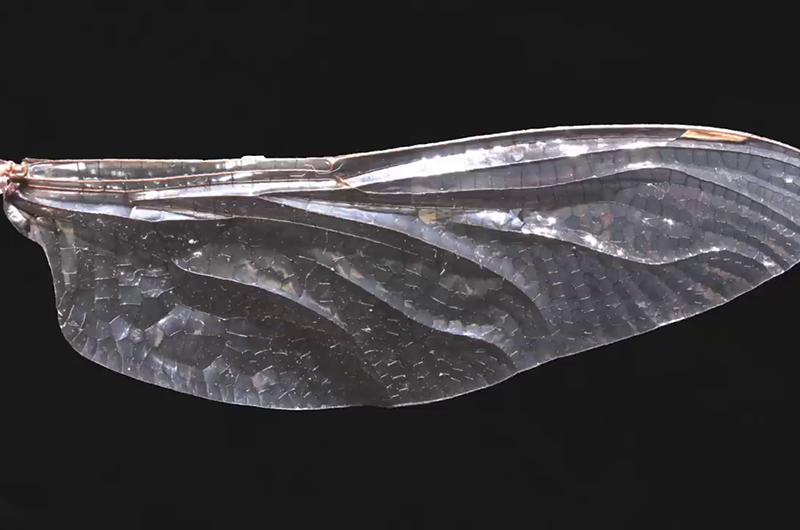 Corrugated wings