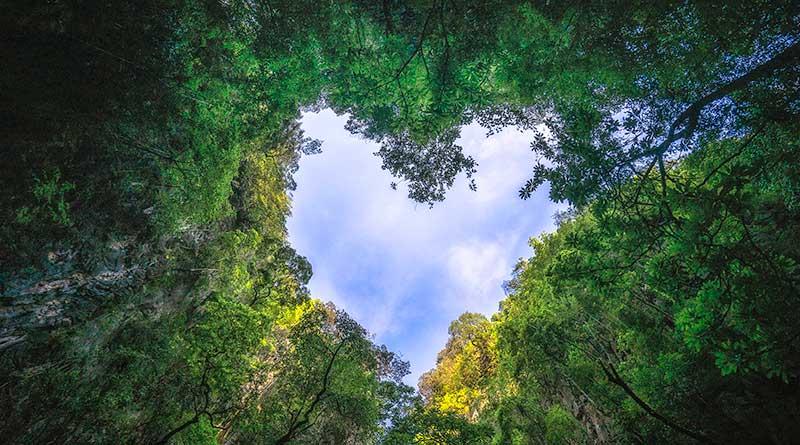Rainforest-feature-image