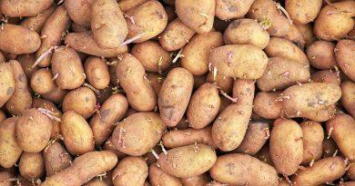 Sprouting-potato