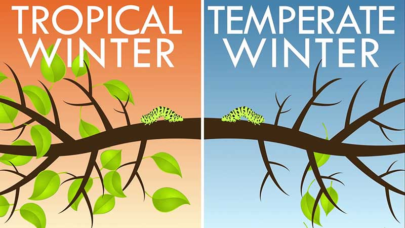 Tropical-temperate-winter