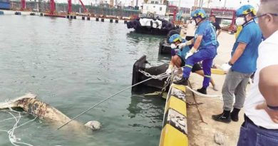 """10-meter long whale carcass found in Haikou and what's """"Whale Fall?"""""""